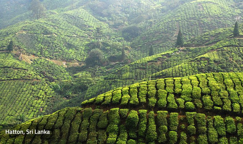 Hatton Sri Lanka Pledge Holidays
