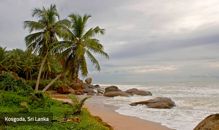 development constraints in sri lanka A study was carried out to identify biological and socio-economic constraints and opportunities for livestock development in coconut plantations in sri lanka.