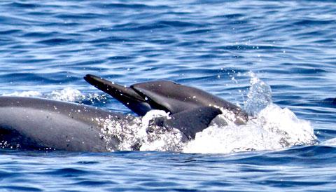 Kalpitiya Dolphin & Whale Watching Sri Lanka