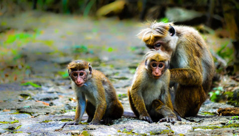 Udawattekele Sanctuary Sri Lanka